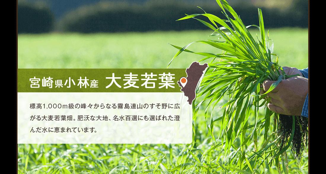 宮崎県小林産大麦若葉 標高1,000m級の峰々からなる霧島連山のすそ野に広がる大麦若葉畑。肥沃な大地、名水百選にも選ばれた澄んだ水に恵まれています。