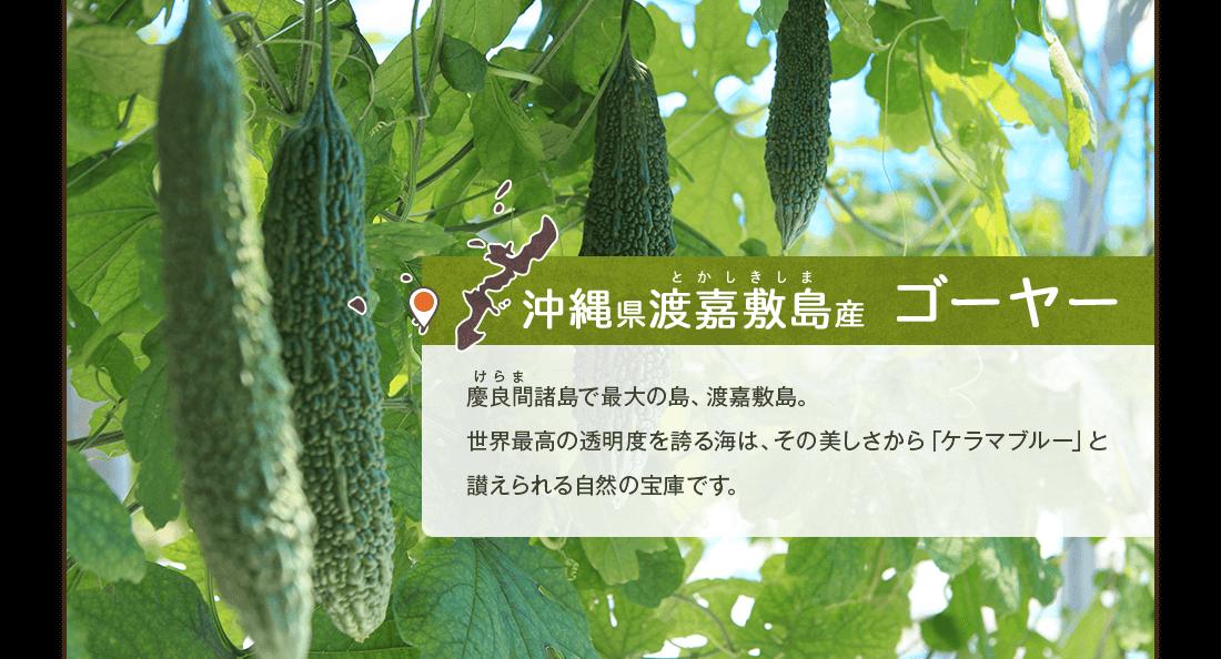 沖縄県渡嘉敷島産ゴーヤー 慶良間諸島で最大の島、渡嘉敷島。世界最高の透明度を誇る海は、その美しさから「ケラマブルー」と讃えられる自然の宝庫です。
