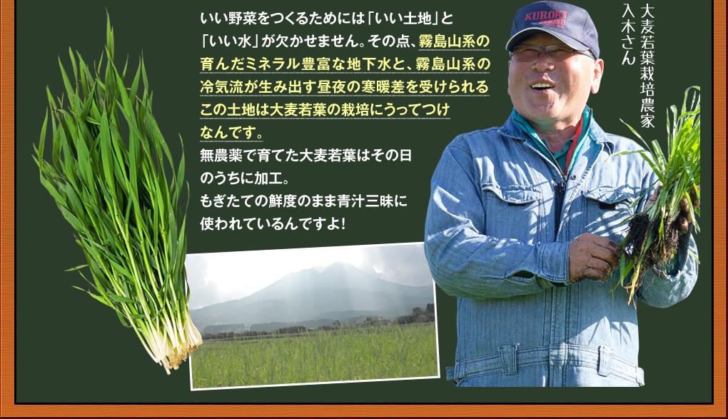 大麦若葉栽培農家,入木さん
