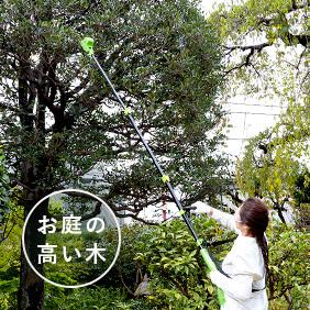 お庭の高い木