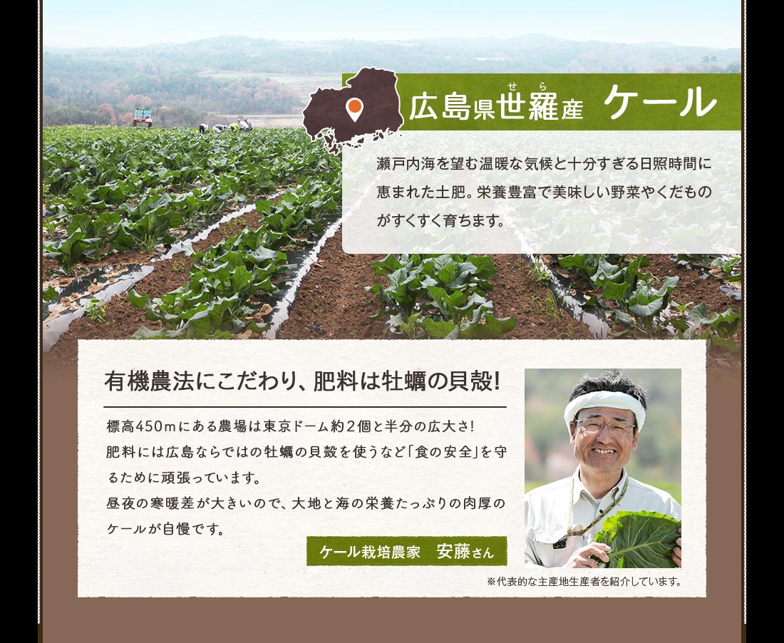 広島県世羅産ケール 瀬戸内海を望む温暖な気候と十分すぎる日照時間に恵まれた土肥。栄養豊富で美味しい野菜やくだものがすくすく育ちます。無農薬にこだわり、肥料は牡蠣の貝殻!標高450mにある農場は東京ドーム約2個と半分の広大さ!ここで無農薬にこだわり、肥料には広島ならではの牡蠣の貝殻を使うなど「食の安全」を守るために頑張っています。昼夜の寒暖差が大きいので、大地と海の栄養たっぷりの肉厚のケールが自慢です。ケール栽培農家安藤さん