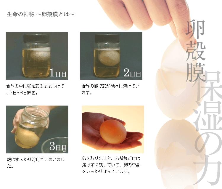 生命の神秘 〜卵殻膜とは〜。知られざる保湿の力卵殻膜